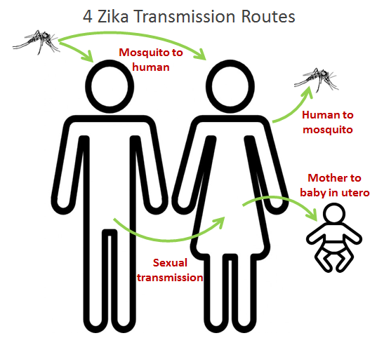 Zika Transmission Routes